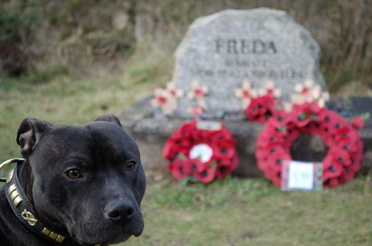 Freda's Grave, with shadow paying his respects