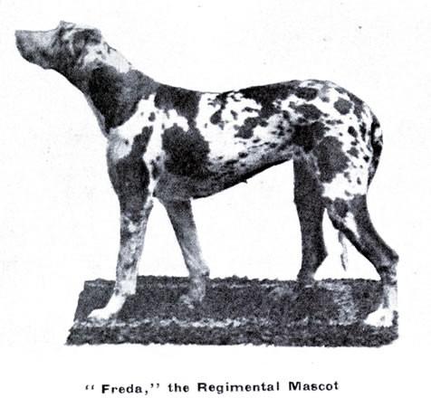 freda-mascot